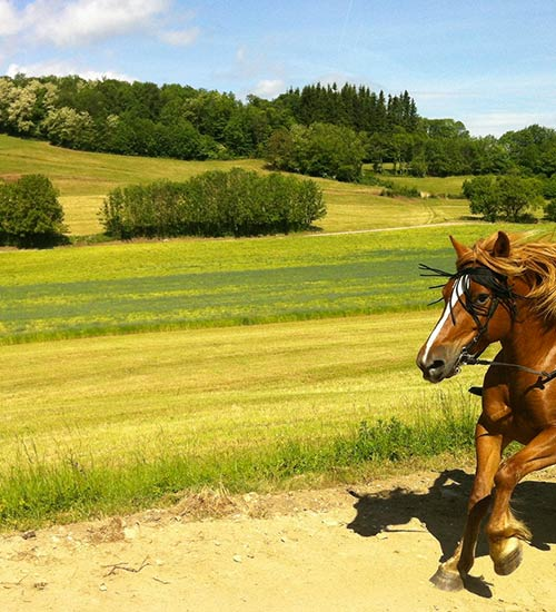 Balade à cheval à Bourg-en-Bresse