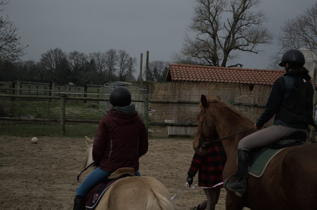 cheval equitation stage